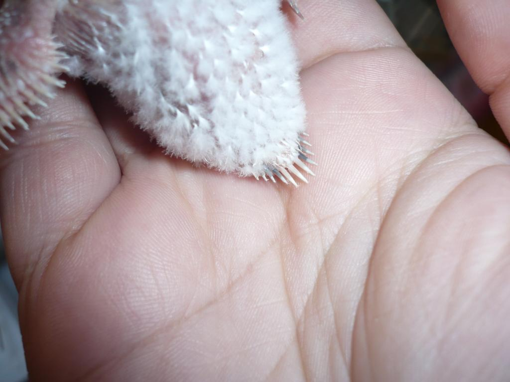 Baby mutations by pin feathers-p1220233.jpg