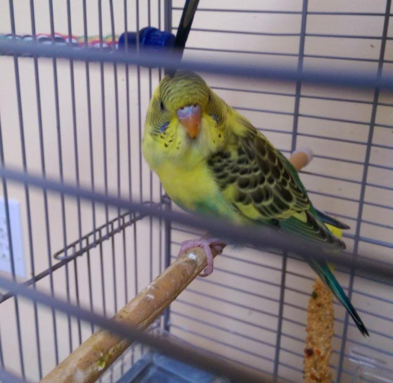 Gender Identity-parakeet-1.jpg