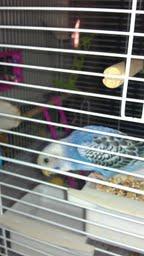 Mr. Petey enjoying his morning videos-petey2.jpg