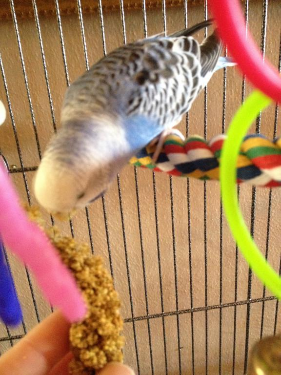 A Few Questions About Budgie's Mutation-photo-1-12.jpg