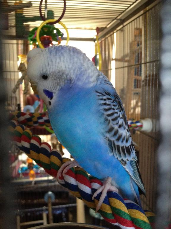 A Few Questions About Budgie's Mutation-photo-1-9.jpg