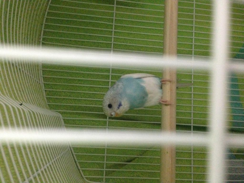 Kiwi and Blue's Playtime Journal :>-photo-1.jpg
