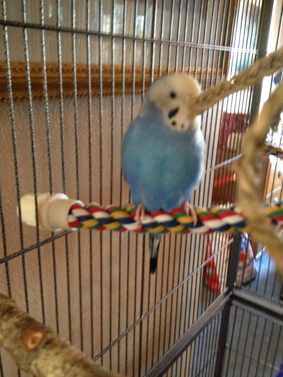 A Few Questions About Budgie's Mutation-photo-2-10.jpg