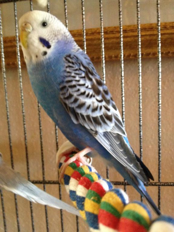A Few Questions About Budgie's Mutation-photo-2-9.jpg