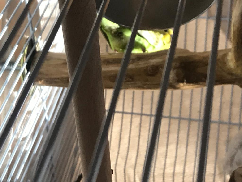 New budgie, is this a bad sign?-photo-2020-10-15-19-21-09-1-.jpg