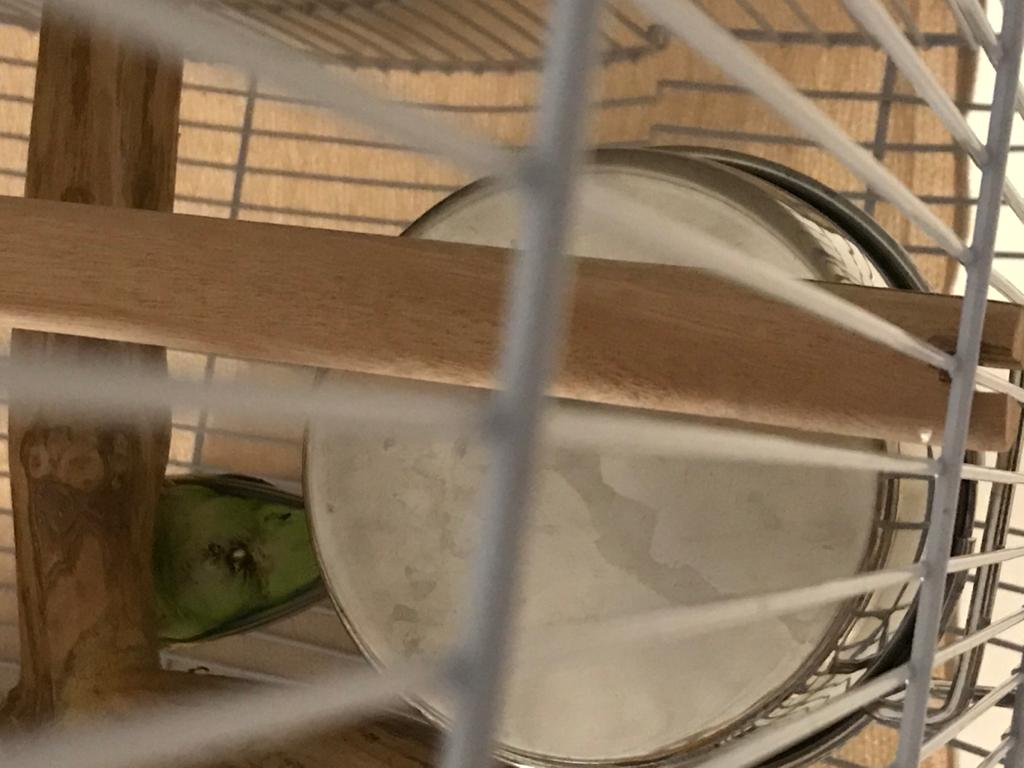 New budgie, is this a bad sign?-photo-2020-10-15-19-21-10-3-.jpg