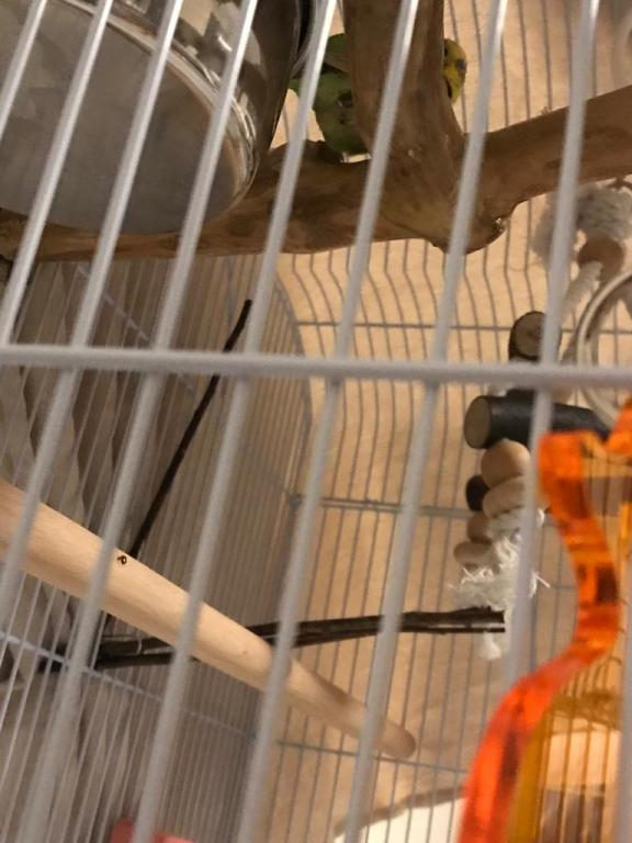 New budgie, is this a bad sign?-photo-2020-10-15-19-21-10.jpg