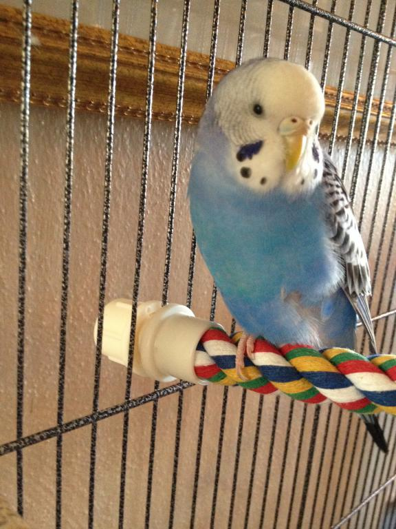A Few Questions About Budgie's Mutation-photo-3-8.jpg