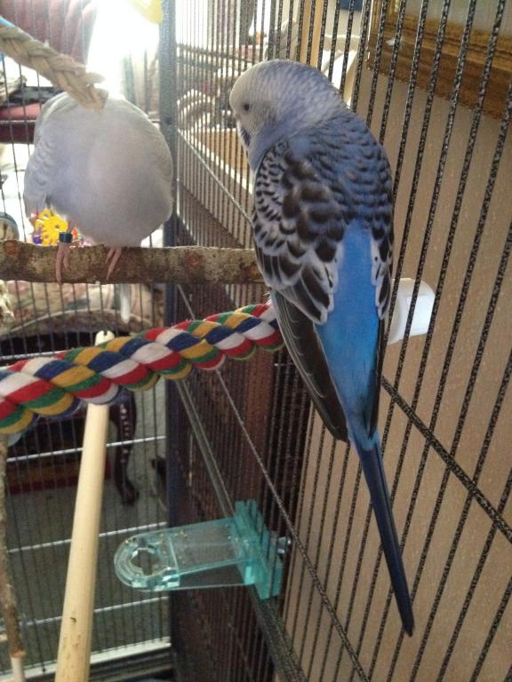 A Few Questions About Budgie's Mutation-photo-4-5.jpg