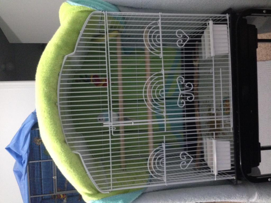 Kiwi and Blue's Playtime Journal :>-photo-5.jpg