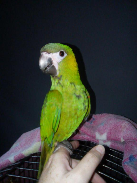 My current other birds! :D-photo_2017-03-31_11-51-17.jpg