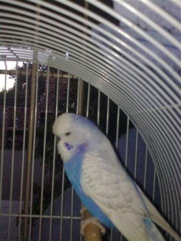 Woozy's new Friend-pic-2-small-.jpg