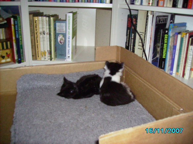RIP cafe my kittens sister-pict0330.jpg