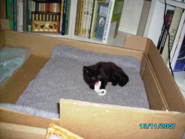 RIP cafe my kittens sister-pict0332.jpg