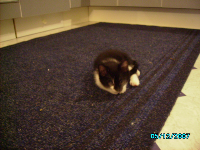 RIP cafe my kittens sister-picture-261.jpg