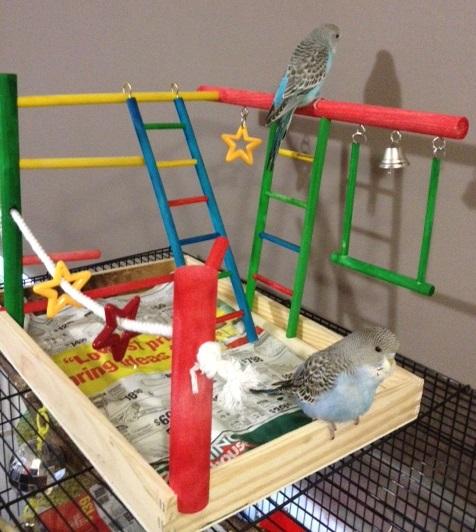 Happy Babies-playground-fun.jpg