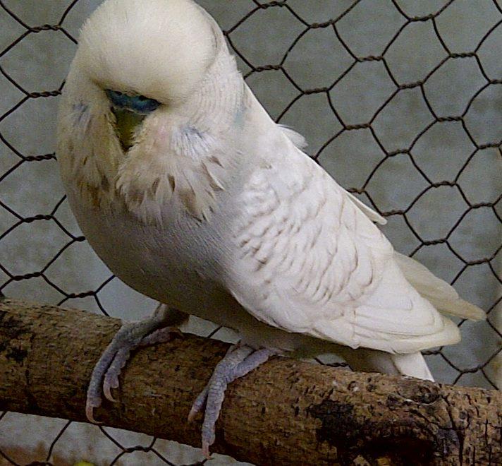 My Show Birds-polokwane-20131218-00759.jpg
