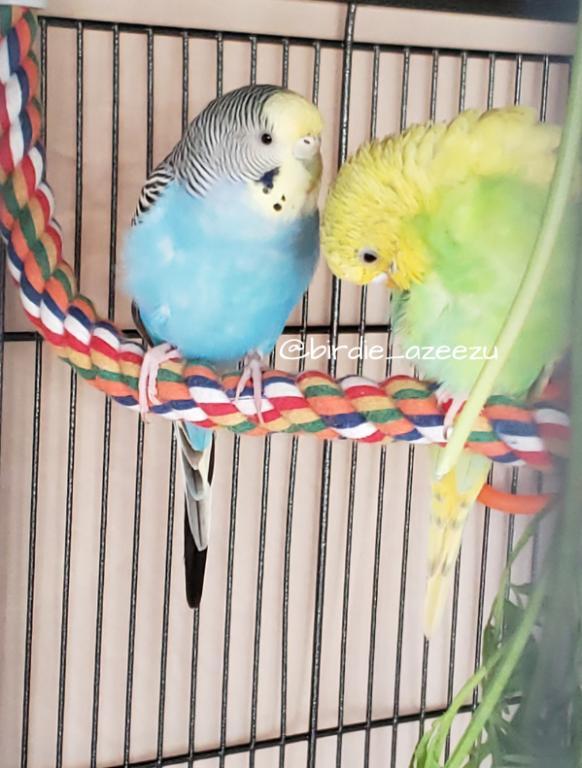 Birdie & Azeezu-post-snack-time.jpg