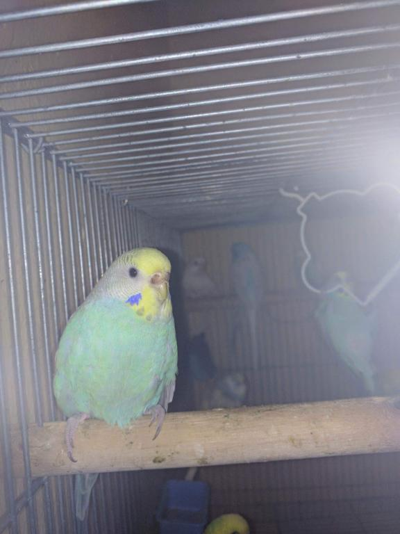 what is the mutation of this female?-received_2207561285936457.jpg