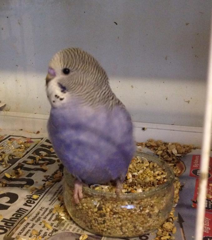 Baby Bird Ready to Come Home!-rocky3.jpg