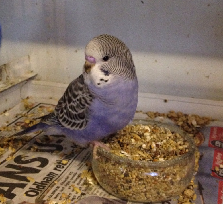 Baby Bird Ready to Come Home!-rocky4.jpg