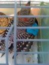Red-bellied woodpecker-ruby1.jpg