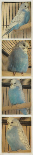 Runt Went To A Photobooth!-runt-picture-strip.jpg