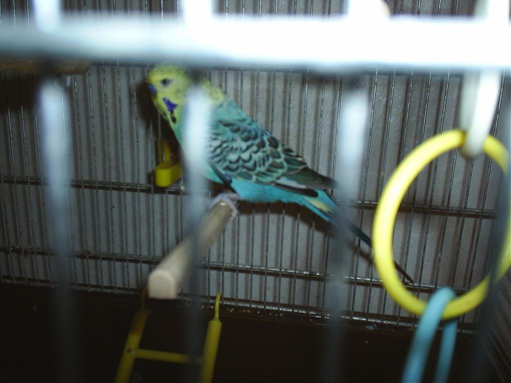 Bluey died-s4010052.jpg