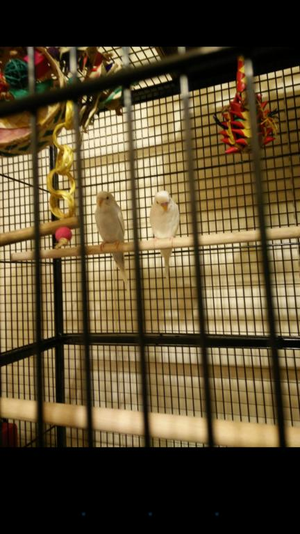 New pictures of my soon to be birds\new members-screenshot_2016-06-19-11-19-30.jpg