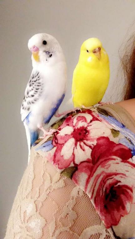 Poet and Pepper!-shoulder.jpg