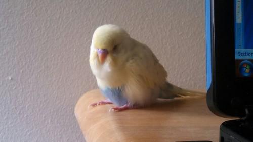 Baby Oliver-sleepy-oliver.jpg