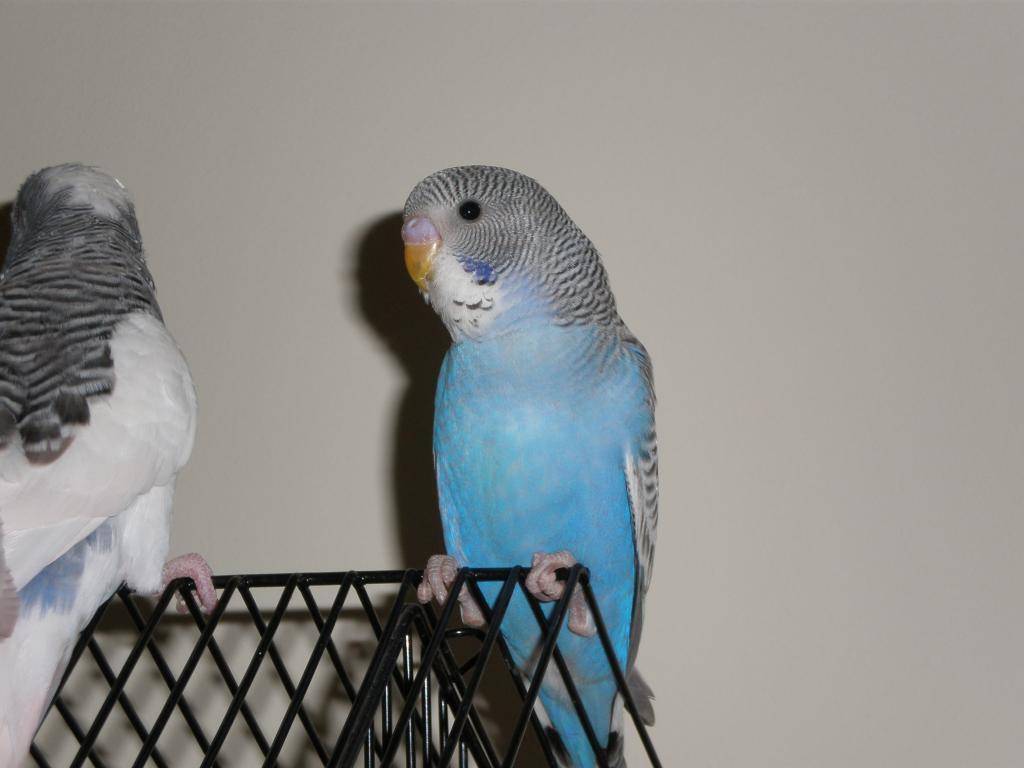 mutation help please-smudge-new-bird-009.jpg