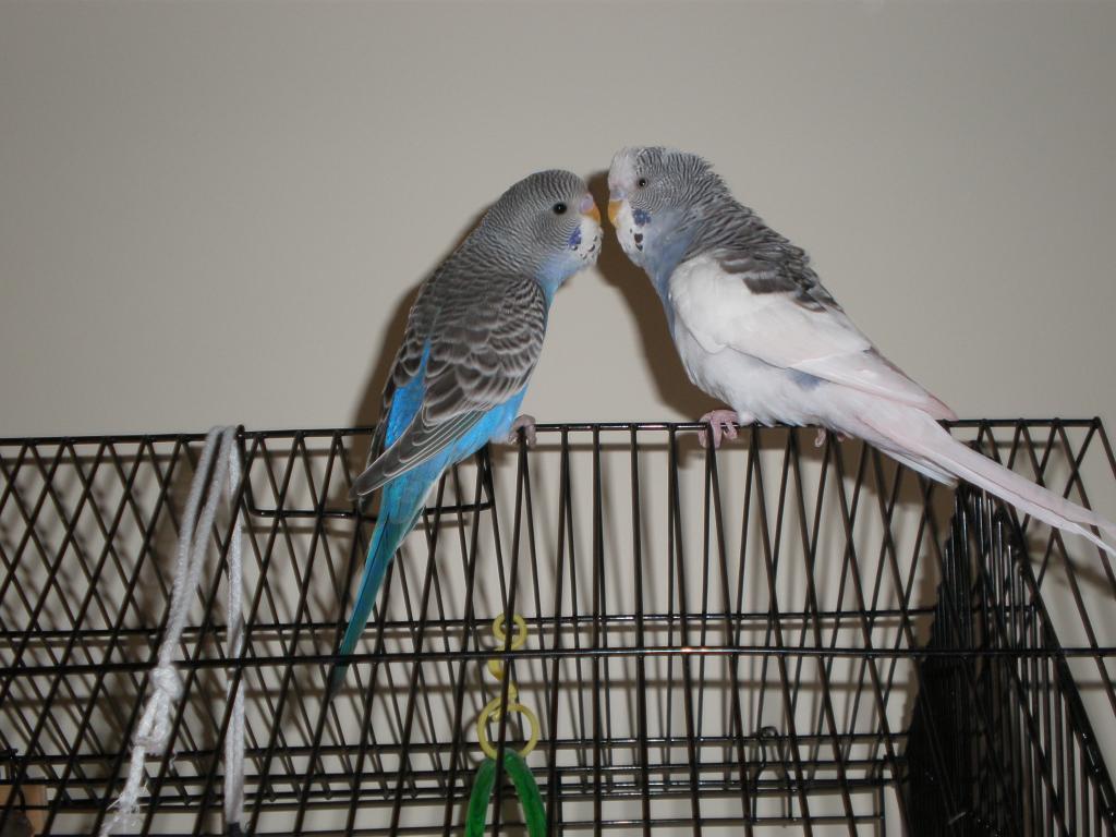 mutation help please-smudge-new-bird-010.jpg