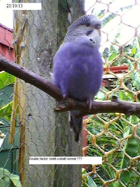 Violet Baby?-sp_a0302.jpg