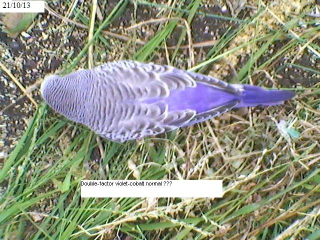 Violet Baby?-sp_a0339.jpg