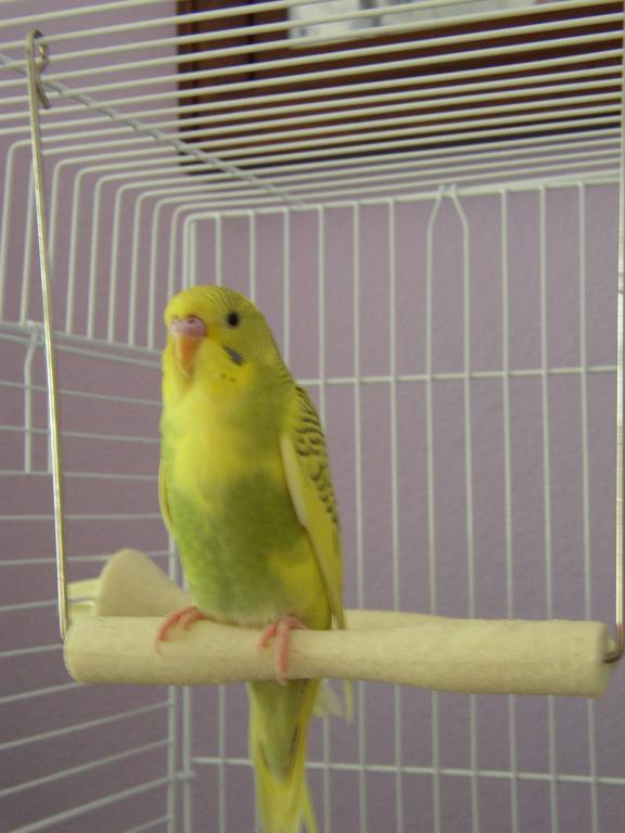 Sunny!-sunny-alert-swing.jpg