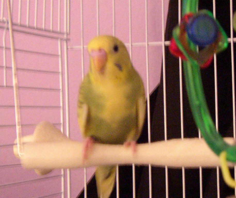 Sunny's First Photos-sunny-swing2.jpg