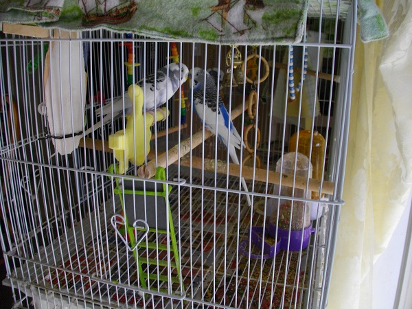 Goodbye Captain Parakeet-sunoncage2014.jpg
