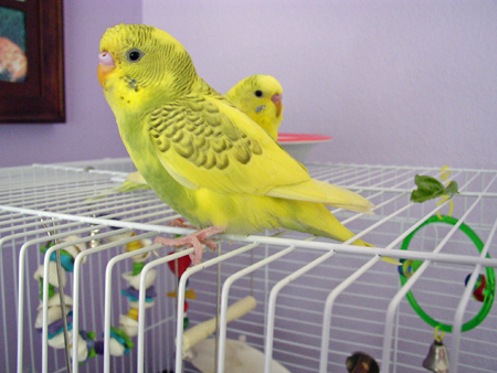 FaeryBee's Sunny and Shelby-tb-close-up-out-cage-time-best.jpg