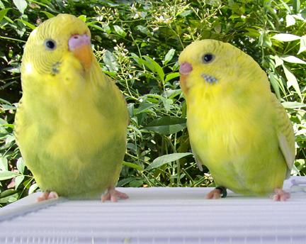 FaeryBee's Sunny and Shelby-tb-sunny-shelby-cage-top.jpg
