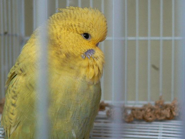 New baby 2014-01-tina-louis-chick-1.jpg