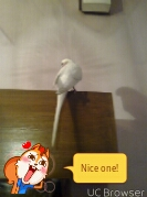 my budgie's featherless red face..help!-tmpdoodle1443219025309.jpg