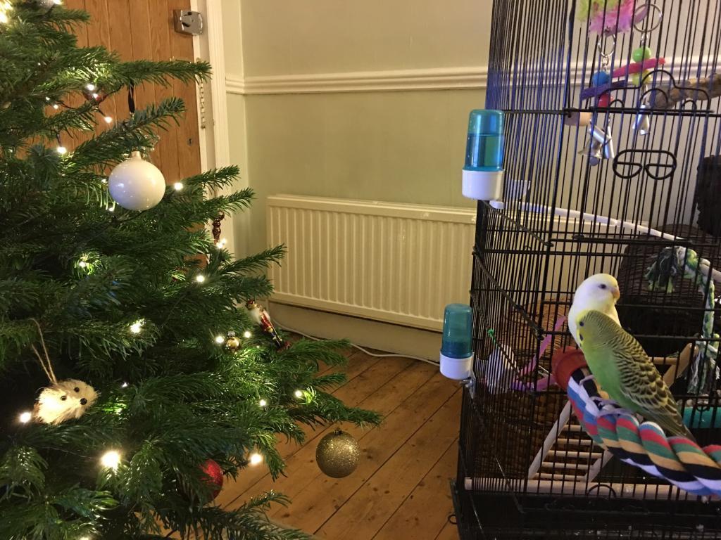 T'is the season! But is it safe? (Christmas tree)-tree.jpg