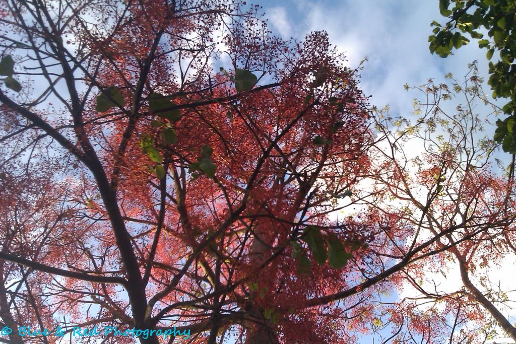 Blue & Red Photography-tree.jpg
