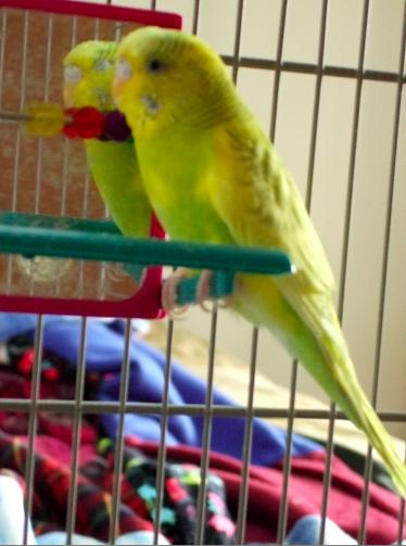 Tiny new addition-twinkiebird.png