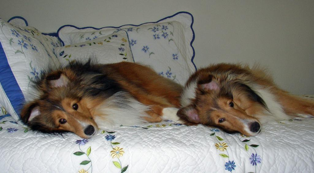 Kylie and Autumn-additional pics as requested-two-lazy-pups1-cropped.jpg