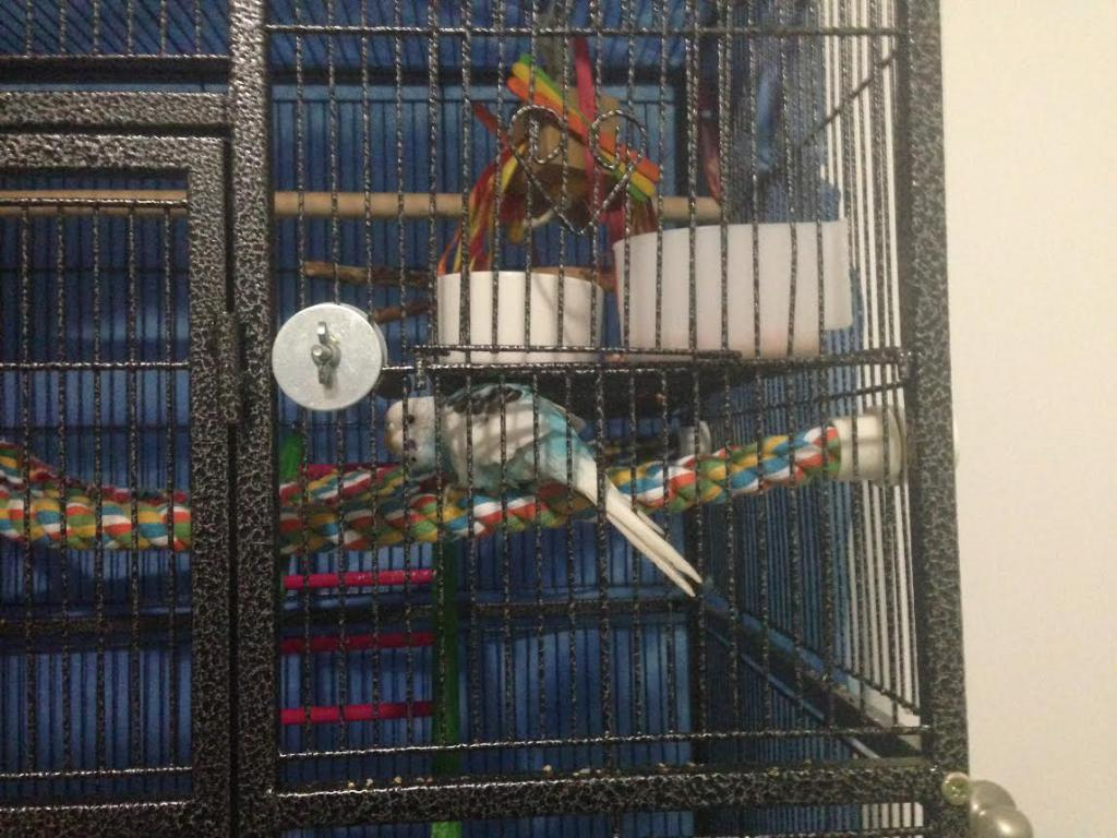 I gave her the biggest cage I could buy but...-unnamed.jpg
