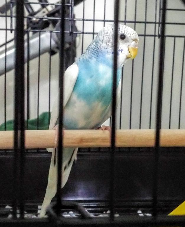 Meet Rudyard-uploadfromtaptalk1466563097229.jpg