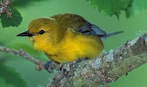 I think I found something awesome-warbler1.jpg