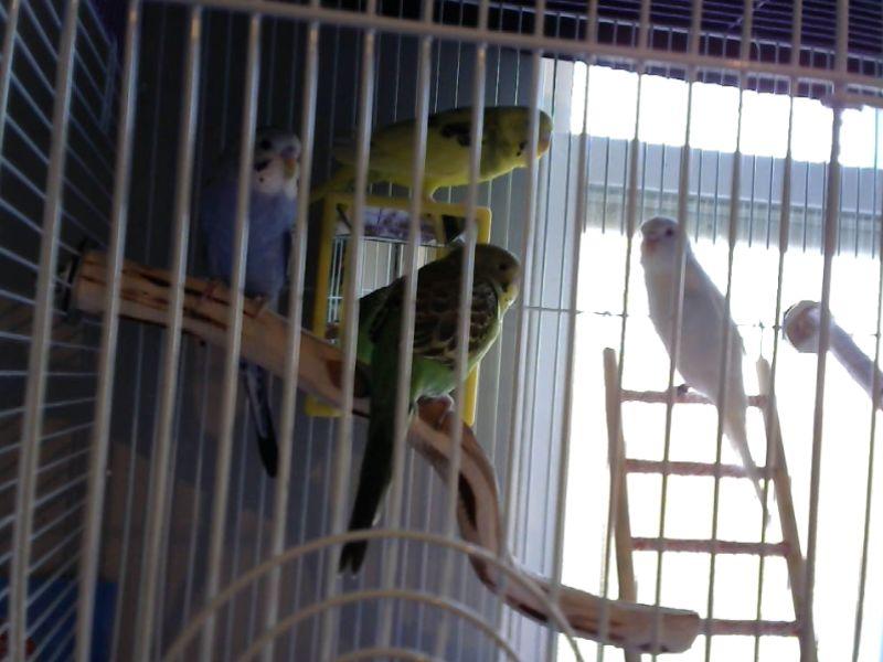 Antisocial Lemon-webcam-toy-photo2.jpg